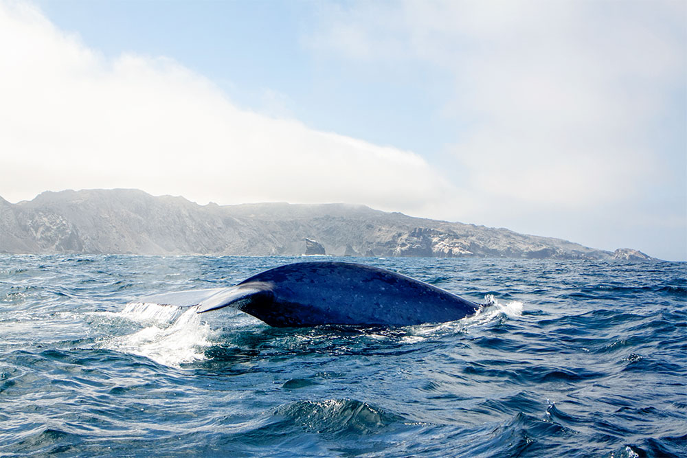 智利远洋观光的最佳地点